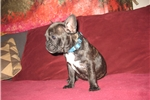 Picture of Twinkle, AKC