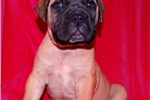 Picture of ***** Audrey  ***** Ready August 14th!