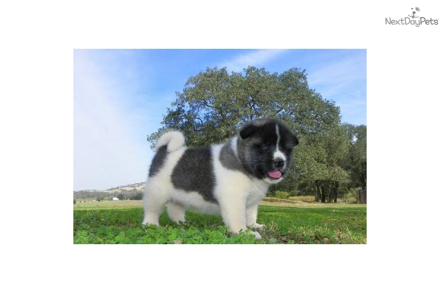 akita single women Akita inus: the most honest dog breed review you'll ever find about akita inu temperament, personality, and behavior.