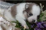 Picture of AKC Blue Bayou