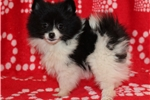 Picture of AKC Helen