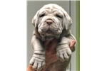 Picture of Pick of the litter for sale