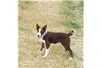 Picture of Prince Harry the Border Collie