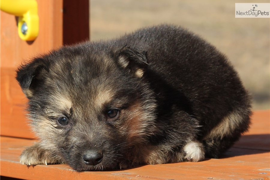how to get a puppy registered