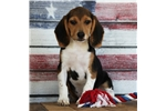 *Champ*www.buypuppiestoday.com | Puppy at 14 weeks of age for sale