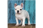 Picture of *Rose*Full Registration*www.buypuppiestoday.com