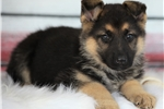 Picture of *Gus*Financing Available*417-274-0443