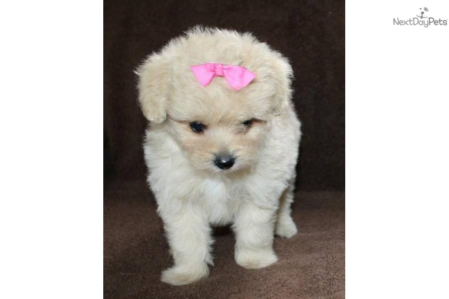 places to buy a puppy near me pets world