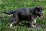 Picture of Skye blue girl