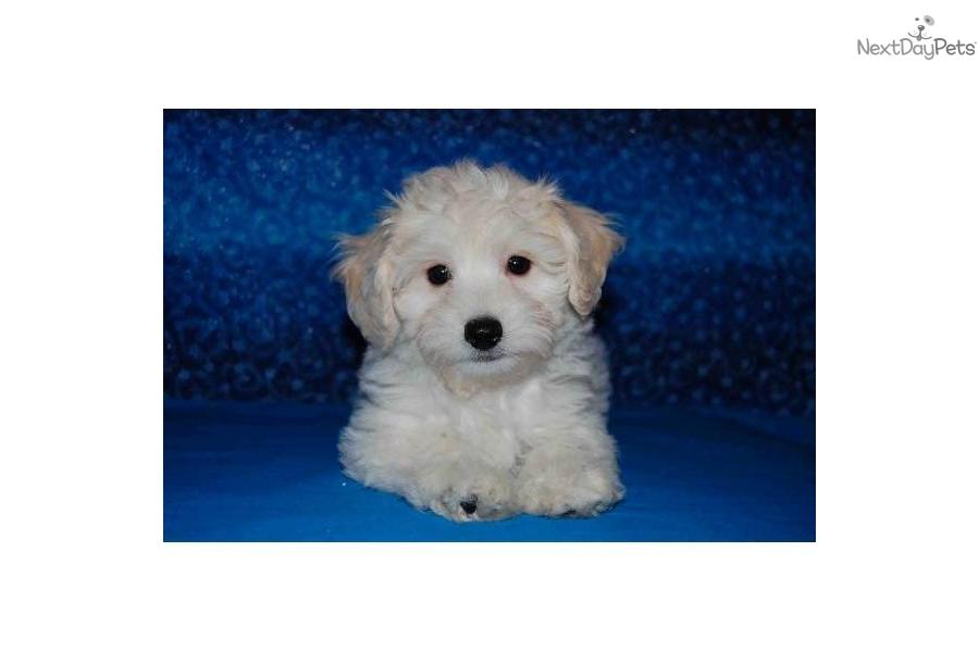 Hypoallergenic Dog Breeds In Louisiana