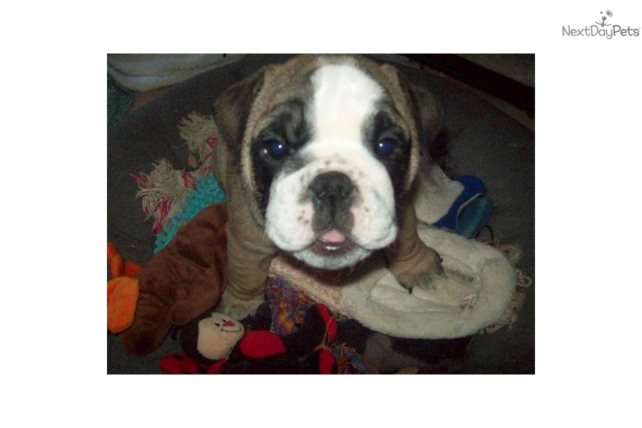 Dogs And Puppies For Sale In Rct