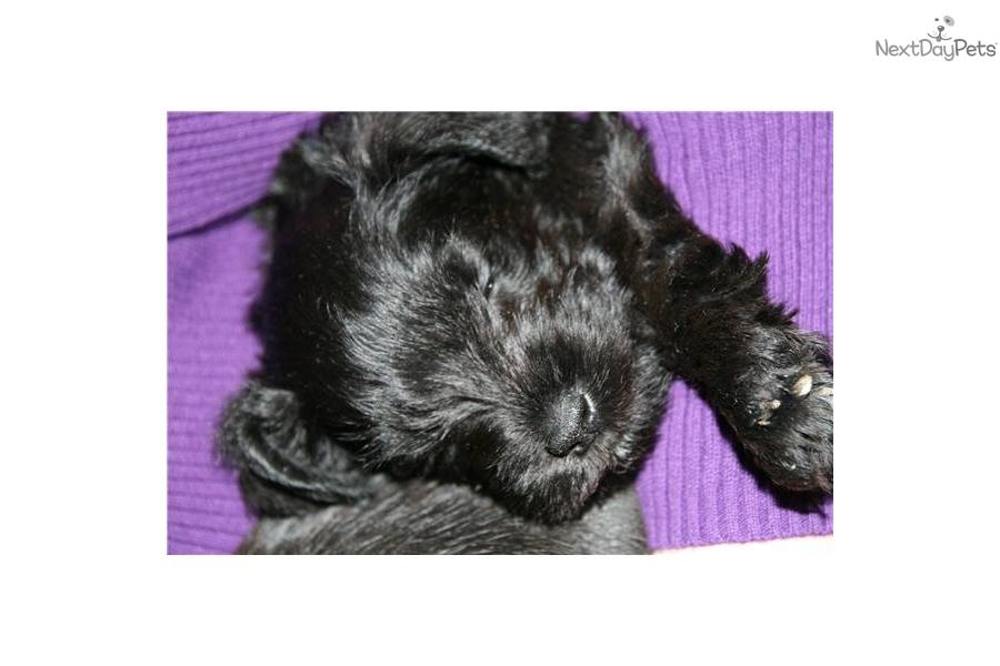 ... Dog For Sale In Winston Salem North Carolina | Apps Directories