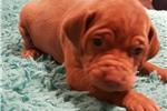 Picture of Otis