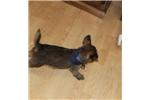 Picture of Otis..Amazing..SHIFFON