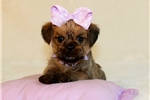 Picture of Daisey..Awesome..Shiffon