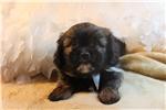 Picture of Benny - Wonderful Shiffon!!!
