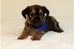 Picture of Otis...Great Companion..Shiffon