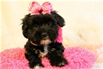 Picture of Daisey..Yorkie Chin..Awesome