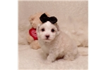 Picture of Cookie..I Love You..Watch My Adorable Video !!