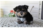 Picture of Peanut..Adorable !!