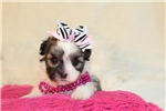 Picture of Princess..Precious Girl!!