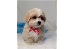 Picture of Buddy..Cute Cute..Watch My Adorable Video!!