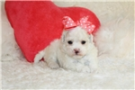 Picture of Daisey.. Irresistible !!