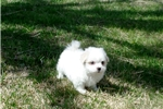 Picture of Otis...Great Companion..Watch My cute Video!!