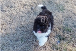 Picture of Bandit..Snuggle Friend..Watch My sweet VIDEO!!