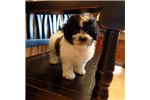 Picture of Oreo..Adorable..Watch My Cute VIDEO!!