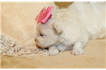 Picture of Bunny..Beautiful !!