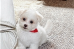 Picture of Biscuit..Cute... Watch My Cute VIDEO!!