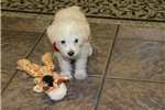 Picture of Fritz..Watch my cute Video !!