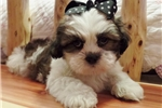 Picture of Oak..Adorable..Watch My Cute Video!!
