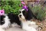 Picture of Rosie - Beautiful Shiffon -Sweet Girl!