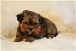 Picture of Parker..Cute Cute Cute!!