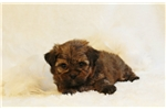 Picture of Bentley..Adorable!!