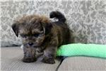 Picture of Otis...Great Companion!!