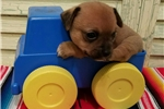 Picture of Tiny BUSTER BROWN