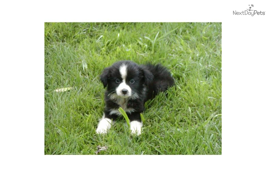 Black Creek Dog Training