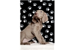 Picture of Male Weimaraner waiting list