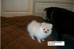 Picture of Twinkle Twinkle Little Star