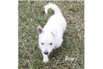 Picture of Riley