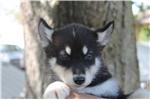 Picture of Dash