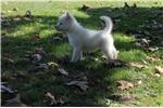 Picture of Mia