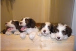 Picture of 4 Paws Pet Care