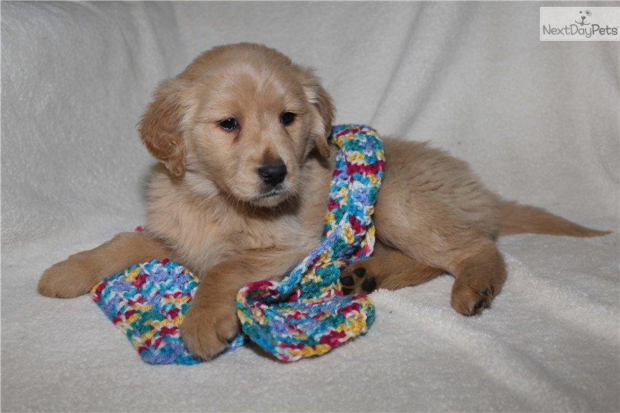 Goldie S Gentle Dog Grooming