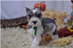 Picture of AKC ~~Handsome Lil Dakota~~
