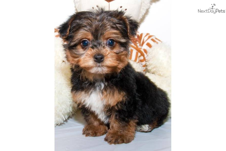 photos short haired medium sized dog breeds names of small dog breeds ...