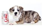 Picture of Alexa our Female Bulldog
